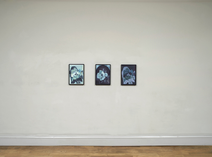 Christopher Hanlon 'Magnolia Blossom 1,2,3' (triptych), oil on linen stretched over board, each: 39.8×28.6cm, frame: 42.5×31.5cm 2014, photography by Andy Keate