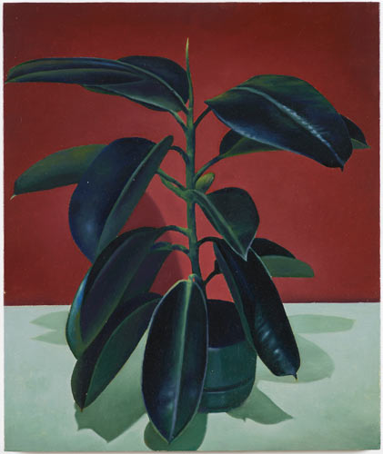 Christopher Hanlon 'Rubber Plant' oil on linen stretched over board, 60×50.3cm/23.6×19.8in 2014