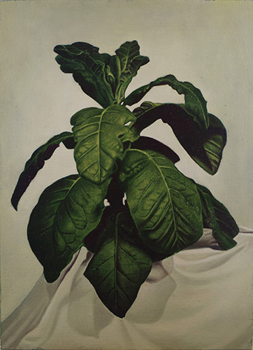 Christopher Hanlon 'Tobacco Plant' oil on canvas stretched over board 54.5×39.5cm 2017 photo by Andy Keate