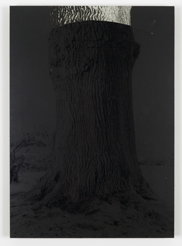 David Gates 'Bark (close–up)' silver gelatin and bitumen on cardboard, 47×33.5cm/18.5×13.1in (unique) 2013, photo by Andy Keate