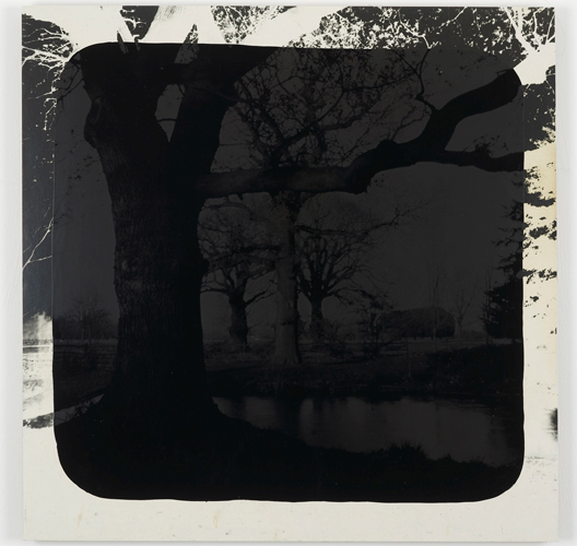 David Gates 'Bark (left)' silver gelatin and bitumen on cardboard, 61×60.5cm/24×23.6in (unique) 2013, photo by Andy Keate