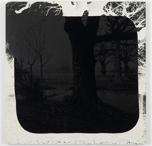 David Gates 'Bark (middle)' silver gelatin and bitumen on cardboard, 60×59cm/23.6×23.2in (unique) 2013, photo by Andy Keate