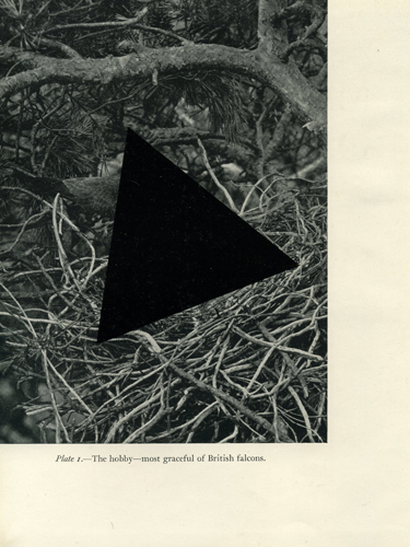 David Gates 'More birds of the day (plate 1)' bitumen on found image, 25.4×20cm (9.8×7.9in) 2012